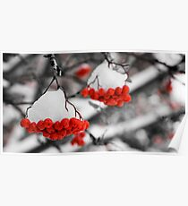 Mountain Ash Berries Poster