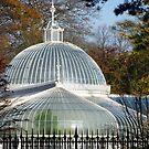 The Dome by Fara
