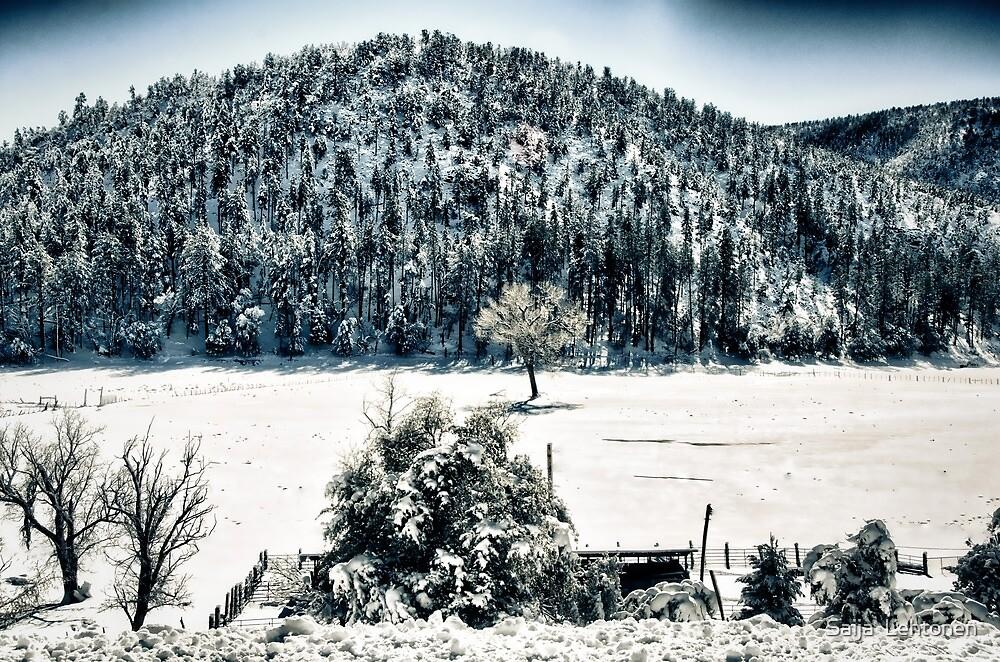 Winter Wonderland  by Saija  Lehtonen