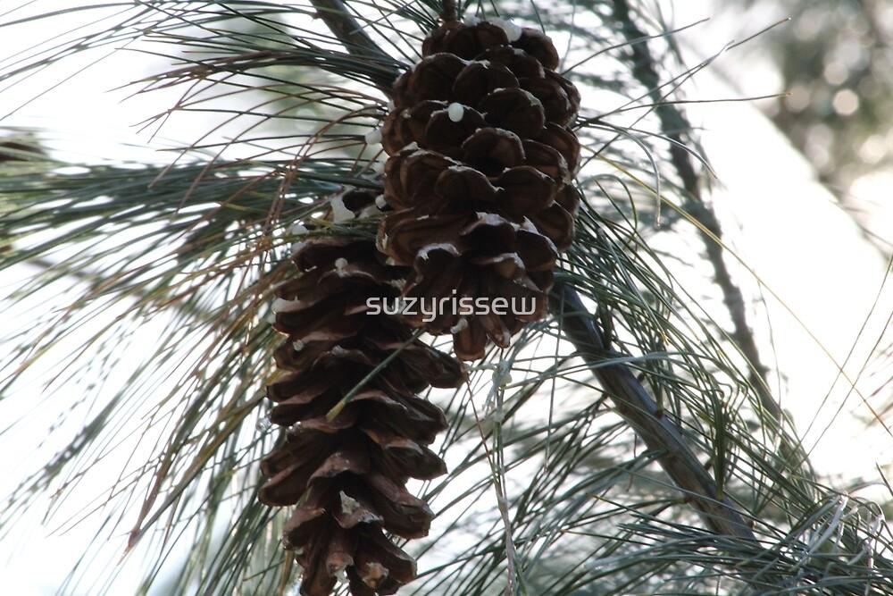 Sappy Pinecones by suzyrissew