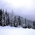 White Christmas by Janice Chiu