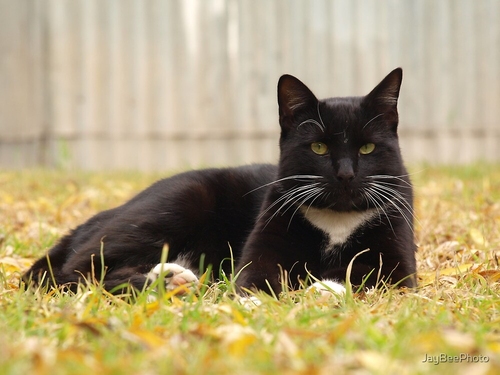 Our Cat Lilo, sadly gone. by JayBeePhoto