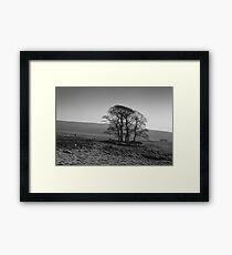 Henside Copse 01 - Yorkshire Dales, UK Framed Print