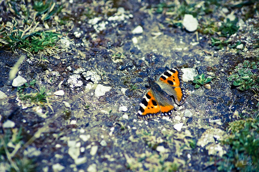 Butterfly 2 by Liev