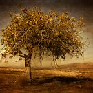 El arbol solitario by marcopuch