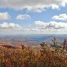 Elk Mountain Overlook by Kelly Nowak