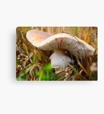 Mushroom - Autumn Colours Canvas Print