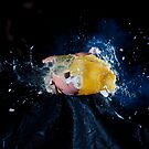 Eggsplosion by Peter Stone