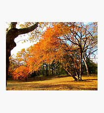 Autumn in New York, Central Park Photographic Print