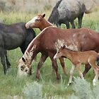 Wild Ponies - Theodore Roosevelt National Park by David Galson