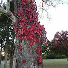 Even the Ivy remembers it's Autumn by phillipcmiller