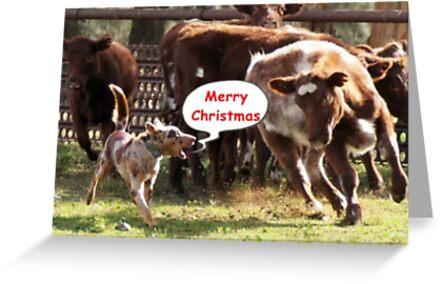Koolie rounding up cattle Christmas Card by Koolie Club  of Australia