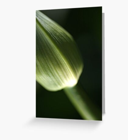 Agapanthus Green Greeting Card