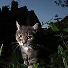 Night patrol by turniptowers