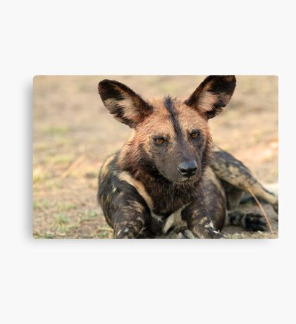 The alpha male of the pack Canvas Print