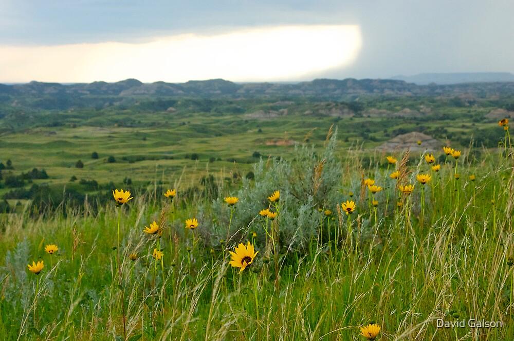 Black Eyed Susans dot the North Dakota Plains before Thunderstorm by David Galson