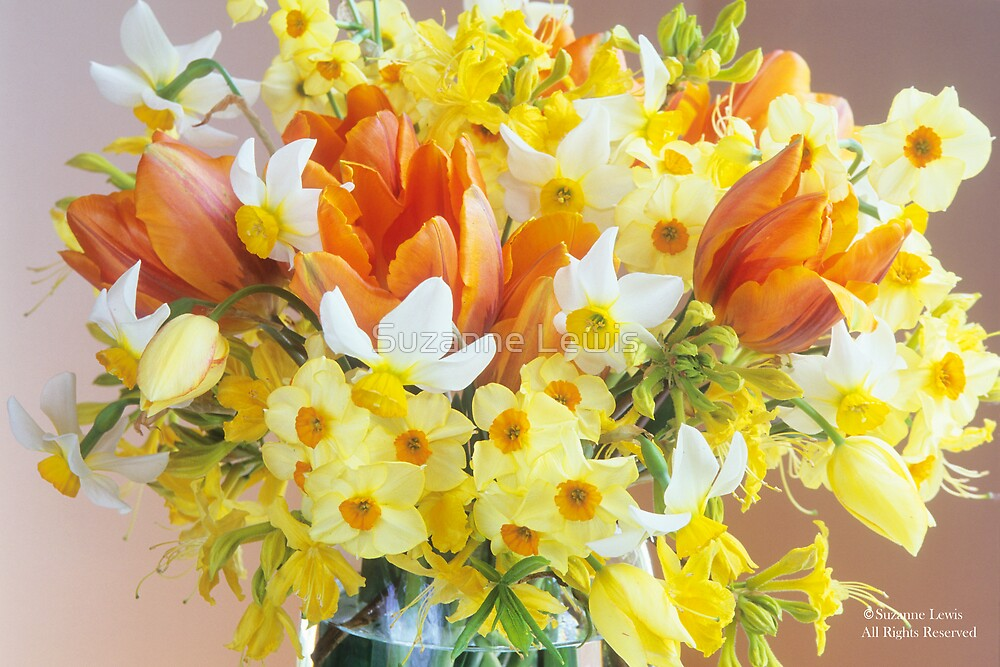 Sunny Tulips and Narcissus by Suzanne Lewis