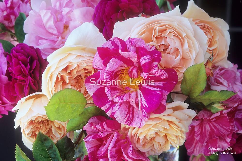 'Rosa Mundi' Meets 'Sweet Juliet' #2 by Suzanne Lewis