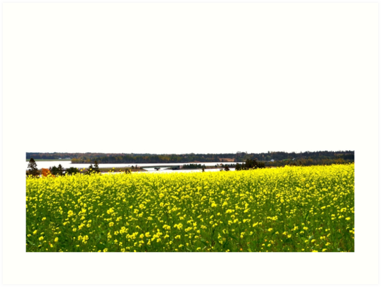 Canola Field and West River Bridge, Prince Edward Island by nadinestaaf