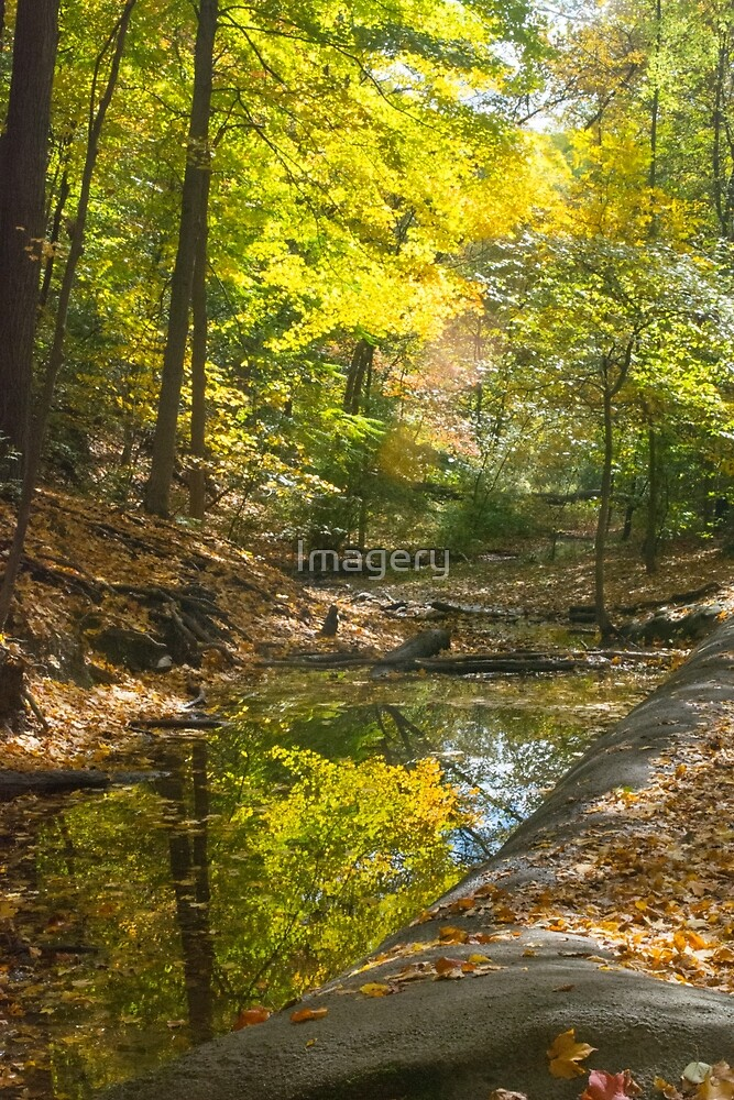 Autumn--Frick Park Pittsburgh by Imagery
