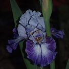 Iris - Hey Dreamer by orkology