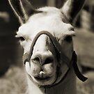 Llama by Jay Reed
