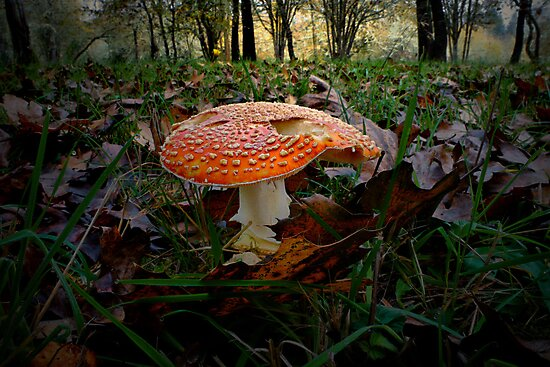 Dream - Fly Agaric - by Charles & Patricia   Harkins ~ Picture Oregon