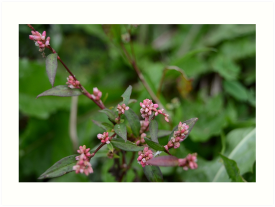 Tiny Pink Buds by nadinestaaf