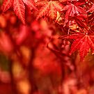 Fall, Falling, Fell. by Vein
