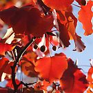 Blaze in Fall Color by Jay Reed
