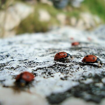 Ladybugs on a rock by queensoft