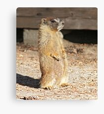 Looking cool Canvas Print