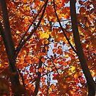 Splendid Autumn by Jay Reed