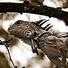 Iguana in Sayulita, Mexico, B&W by Jessica Chirino Karran