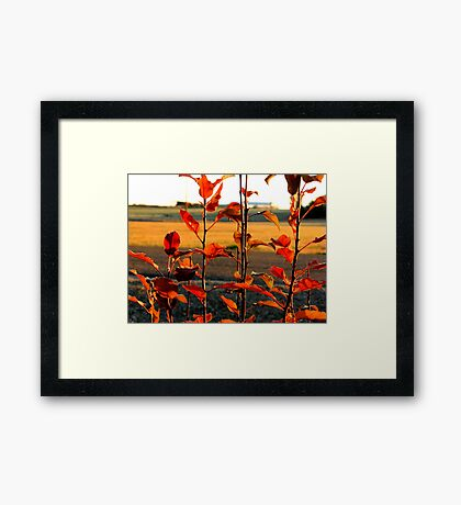 Hue Perfect Framed Print