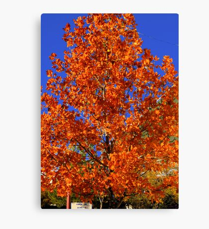 Blue and Orange-  Canvas Print