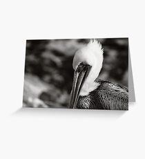 Pelecanus occidentalis Greeting Card
