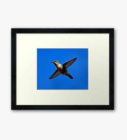 Humming Bird in Flight Framed Print