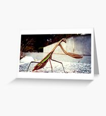 Korean Mantis Greeting Card