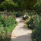 A Happy Path Through Flowers by Paula Betz