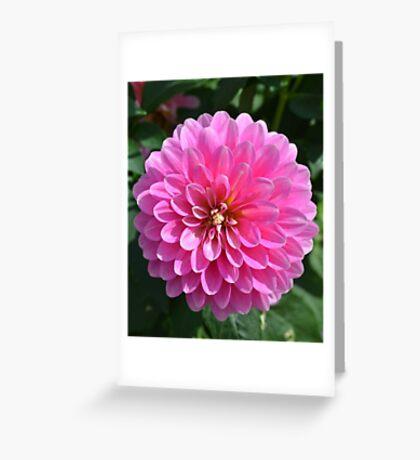Bright Pink Dahlia Greeting Card