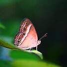 Tropical Butterfly by Erland Howden