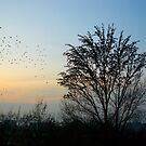 A flock of starlings at sunset by steppeland