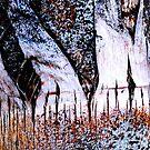 """ Hidden Forest "" by waddleudo"