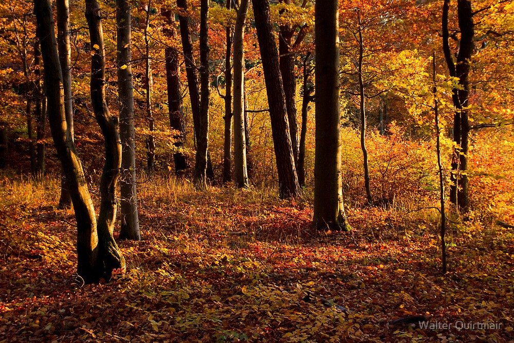 Fall Forest by Walter Quirtmair