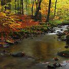 Autumnal Melancholy by Irina Chuckowree