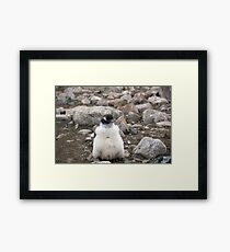 baby penguin Framed Print