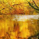 Splash of Gold by MickHay