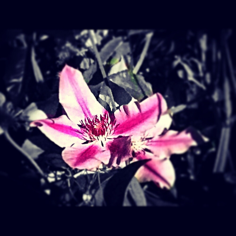 Beautiful Flower by AilzyWhalezy