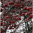 Ice storm in Indiana USA (winter dreams) by jammingene